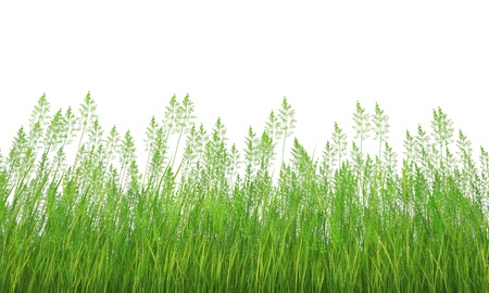 grass Stock Photo - 18093528