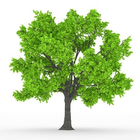 tree Stock Photo - 18512761