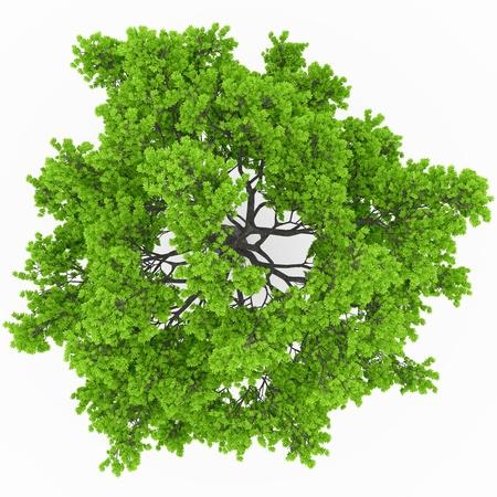 feuille arbre: vue la cime des arbres