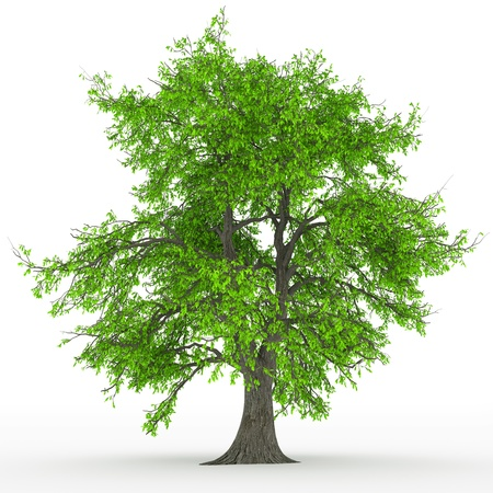 tree isolated Stock Photo - 18764209
