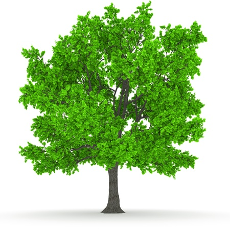 tree Stock Photo - 18942315