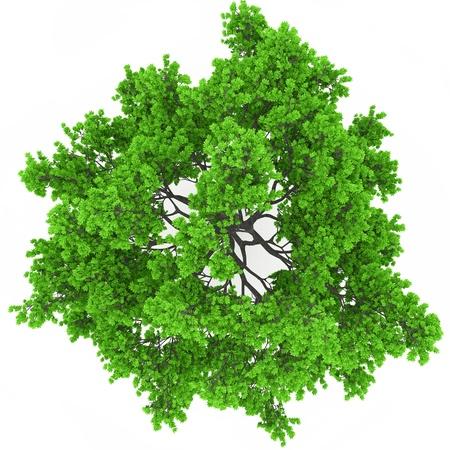 Vue la cime des arbres Banque d'images - 18942316