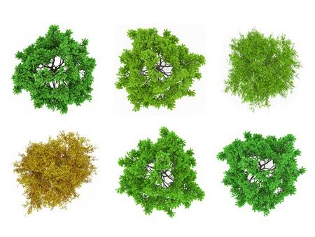 arbre vue dessus: Cime des arbres isol�s Banque d'images