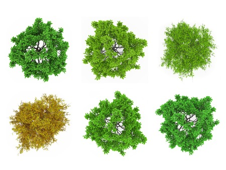 Tree Tops izolované