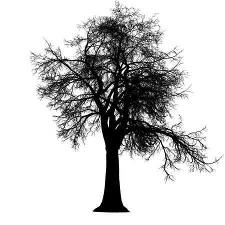 albero senza foglie silhouette dettagliata Vettoriali