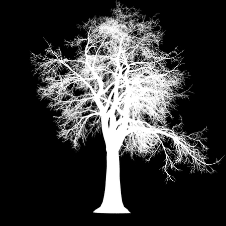 tree leafless side view silhouette isolated - white - vector illustration