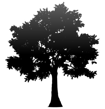 Tree profile silhouette isolated - black gradient detailed - vector illustration
