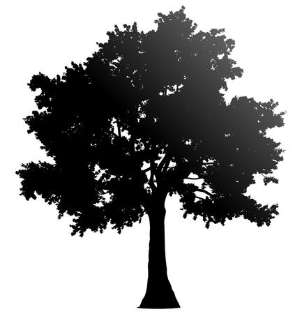 Silueta de perfil de árbol aislado - degradado negro detallado - ilustración vectorial