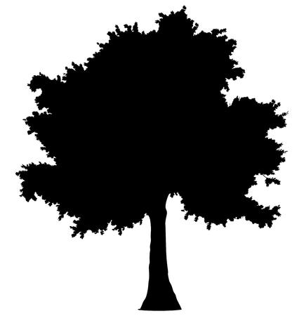 Tree profile silhouette isolated - black simple detailed - vector illustration Illustration