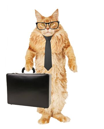 Red Maine Coon cat in glasses, tie, with case on a white background Stok Fotoğraf