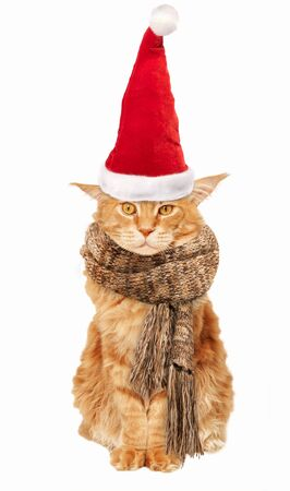 Red Maine Coon cat in a warm scarf and santa claus hat on a white background
