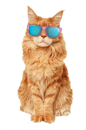 Red Maine Coon cat in sunglasses on a white background Stok Fotoğraf