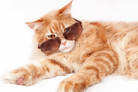 Red Maine Coon cat in sunglasses on a white background 스톡 콘텐츠