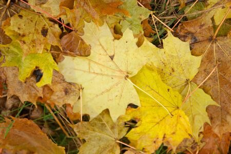 Autumn leaves on the ground. Abstract background