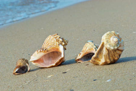 Four seashells by the sea on the sand Stock fotó