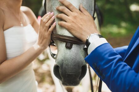 Hands of the bride and groom stroking a horse Stok Fotoğraf