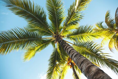 A view of the green branches of the palm trees and blue sky Foto de archivo