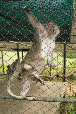A monkey in a cage is hanging on a net. 版權商用圖片