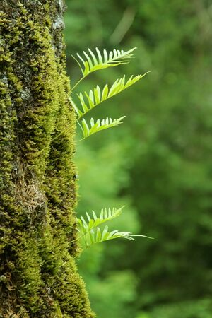 bole: nurseling fern leaves grow up on old tree Stock Photo