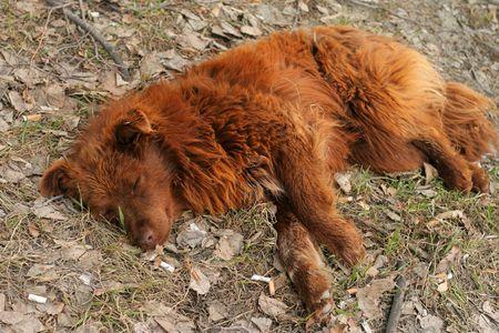 homeless dog sleeps on roadside lawn photo