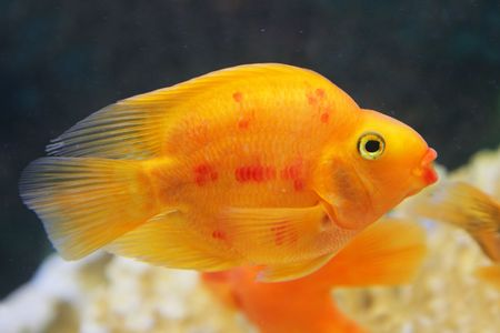 coral colored: tropical fish