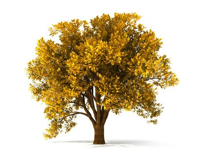 leafage: isolated autumnal tree with yellow foliage Stock Photo