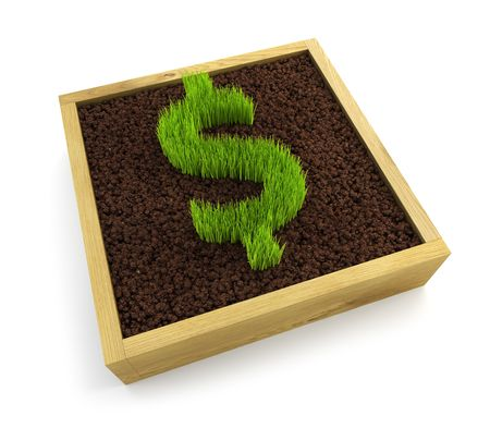 growing dollar symbol isolated on white background photo