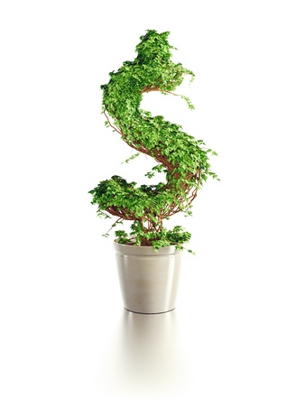 increase: growing dollar tree isolated 3d render