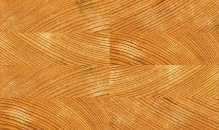 seamless pine texture photo