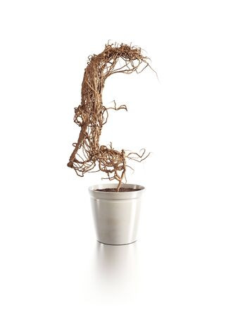 withered: withered pound tree isolated 3d render