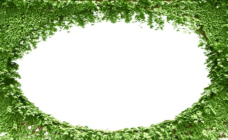 Green leaves frame background photo