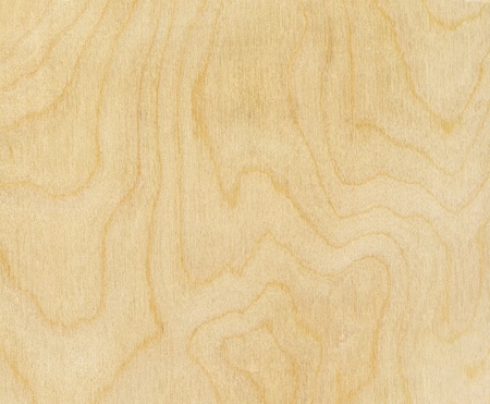 high resolution birch wood texture photo