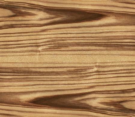 ash tree: high resolution texture of ash tree