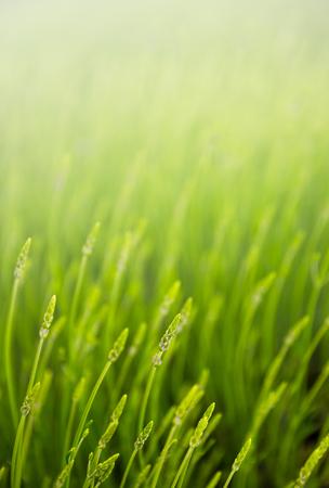 summer meadow with green grass Standard-Bild