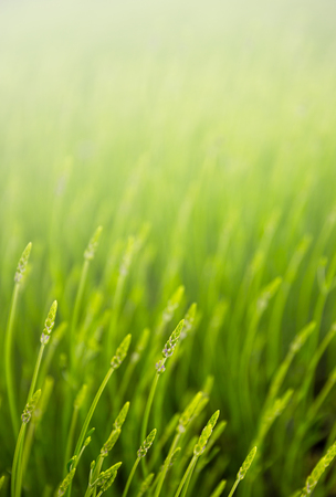 meadow: summer meadow with green grass Stock Photo