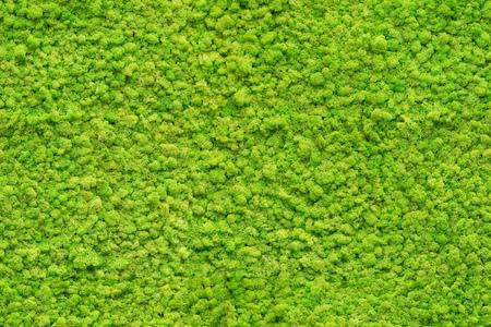 naadloze close-up groene mos textuur Stockfoto