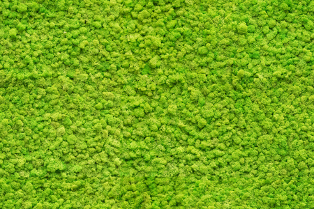 seamless close up green moss texture Foto de archivo - 101842440