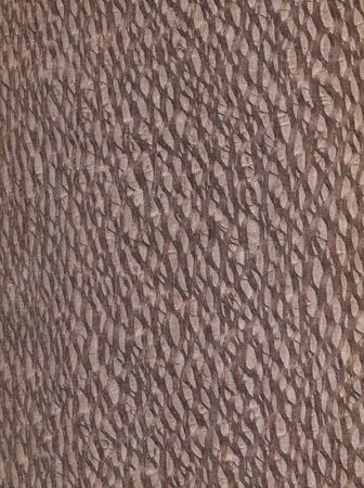 Natural wooden texture background. Lacewood.