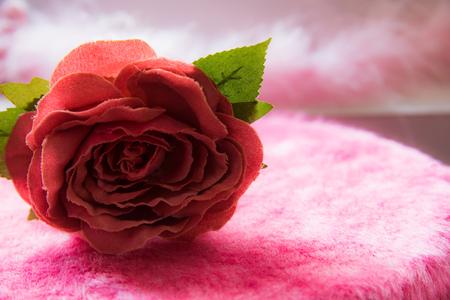 Pink single rose indoor
