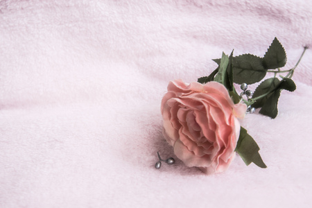 Single dried pink rose