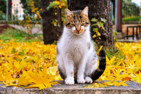 Sitting alley cat with yellow background