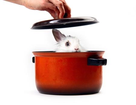White fluffy rabbit in saucepan Stock Photo - 8679517