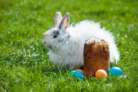 paskha: Easter bunny behind Easter cake and painted eggs