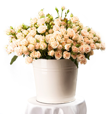 Bunch of creamy roses in a bucket over white  photo