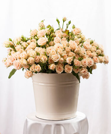 Bunch of creamy roses in a bucket on table photo