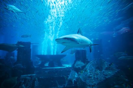 ecosystems: Aquatic animals in huge aquarium, shark in foreground Stock Photo