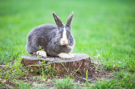 Pet rabbit on a tree stump