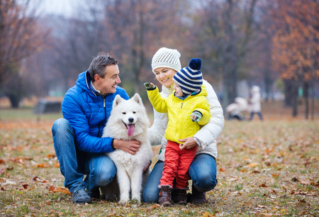family outside: Happy family playing with a samoyed dog in autumn park Stock Photo