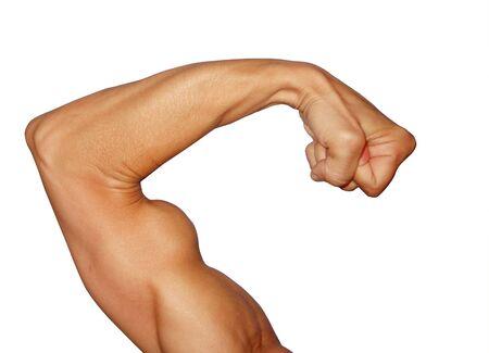 biceps: Biceps