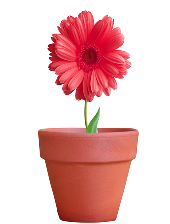 flower in pot isolated on white background